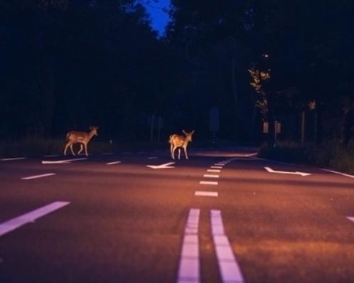 Jak se připravit na setkání se zvěří na silnicích